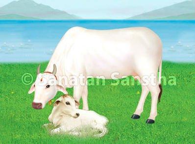 गाय के गोबर, मूत्र से क्या हैं फायदे ? जांच करवाएगी नरेंद्र मोदी सरकार